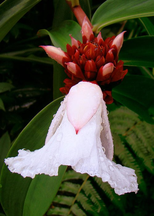 White Flower Greeting Card featuring the photograph White Rainforest Flower by Merja Waters