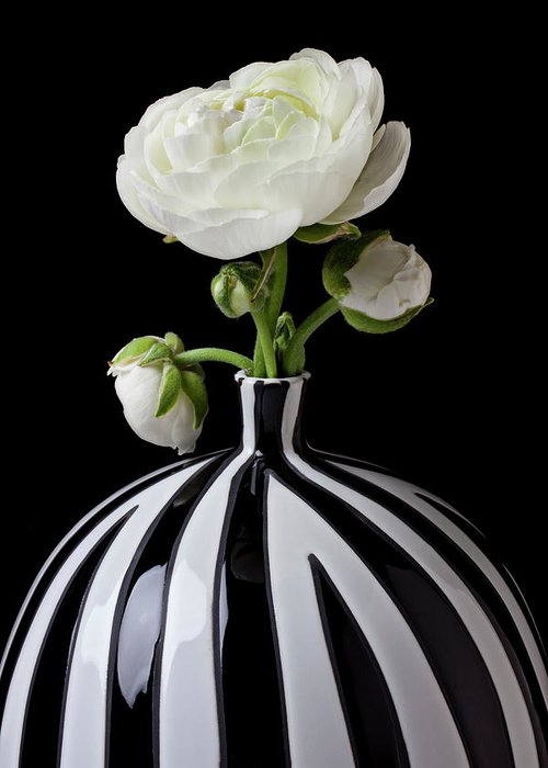 White Greeting Card featuring the photograph White Ranunculus In Black And White Vase by Garry Gay