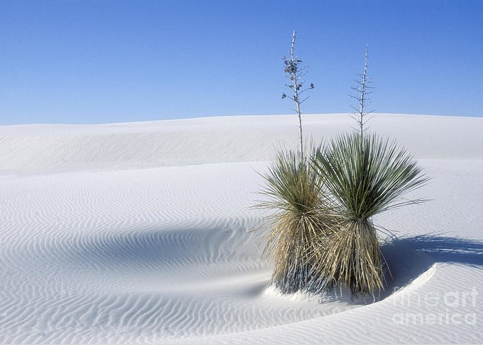White Sands Greeting Card featuring the photograph White Sands Dune And Yuccas by Sandra Bronstein