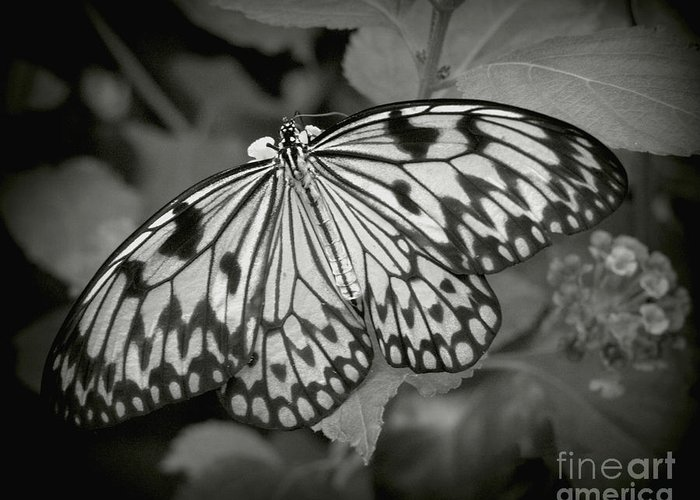 Butterfly Greeting Card featuring the photograph White Tree Nymph - 6 by Dorothy Hilde