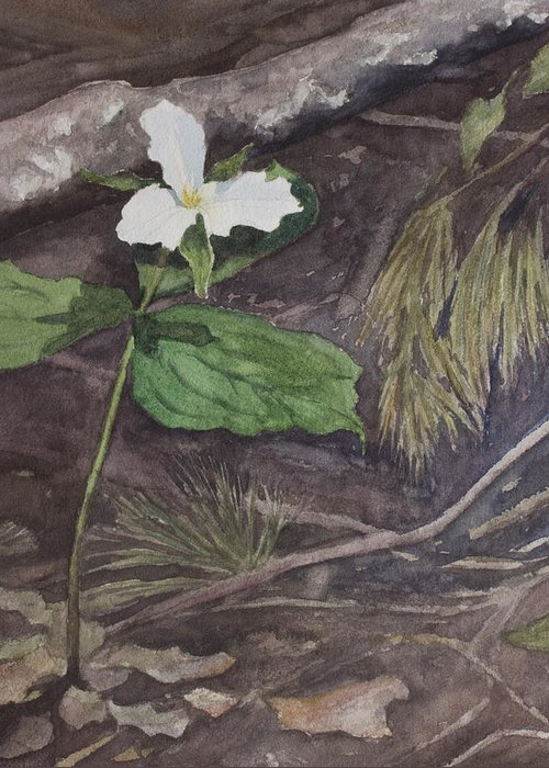 White Trillium Greeting Card featuring the painting White Trillium by Debbie Homewood