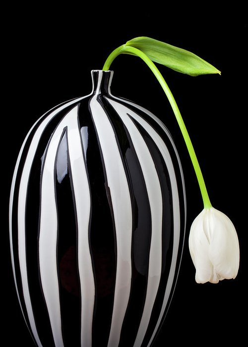 White Greeting Card featuring the photograph White Tulip In Striped Vase by Garry Gay