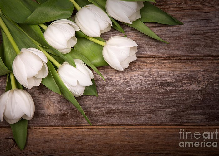 White Greeting Card featuring the photograph White Tulips by Jane Rix