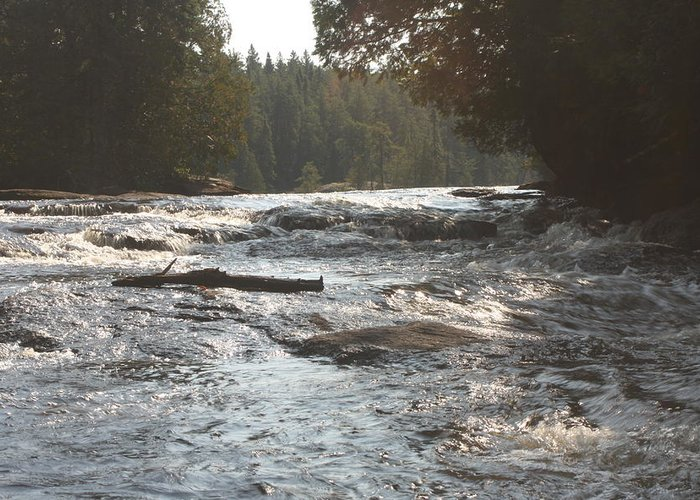Stream Greeting Card featuring the photograph White Water by Francoise Villibord Pointeau