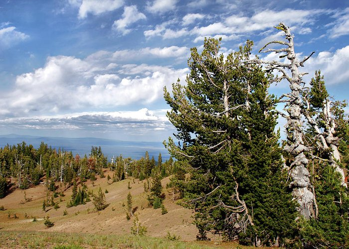 Pines Greeting Card featuring the photograph Whitebark Pine Trees Overlooking Crater Lake - Oregon by Christine Till