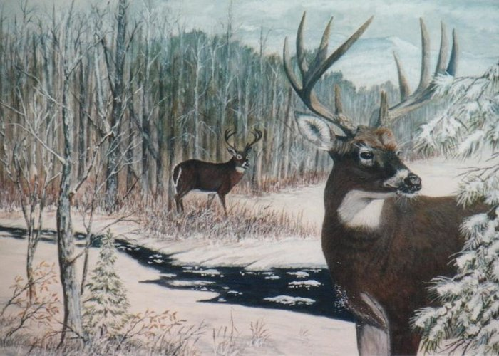 Deer; Snow; Creek Greeting Card featuring the painting Whitetail Deer by Ben Kiger