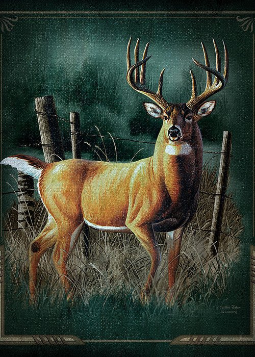 Whitetail Deer Greeting Cards