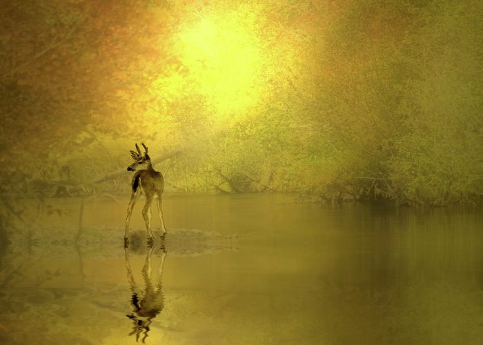 Buck Greeting Card featuring the photograph A Silent Autumn Morning by Diane Schuster