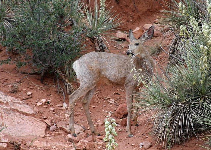 Deers Greeting Card featuring the photograph Wild And Pretty - Garden Of The Gods Colorado Springs by Christine Till