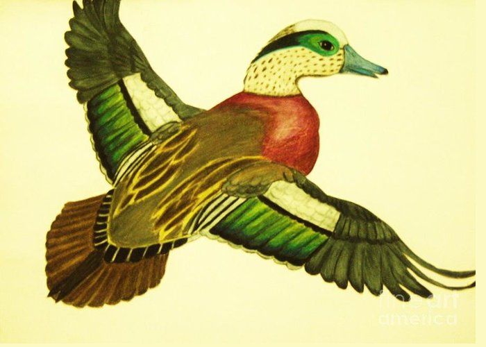 Wild Duck Drawings Greeting Card featuring the drawing Wild Duck by Jamey Balester