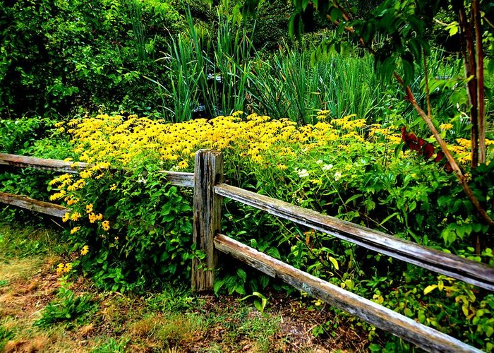 Nature Greeting Card featuring the photograph Wild Flowers And Fence by Richard Jenkins