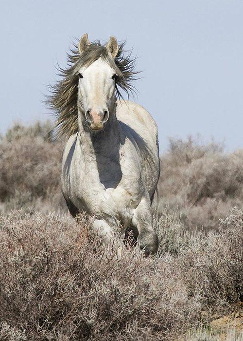 Wild Horse Greeting Card featuring the photograph Wild Grey Stallion Runs Close by Carol Walker