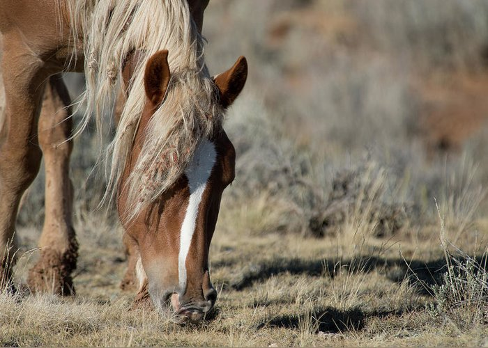 Cody Greeting Card featuring the photograph Wild Horse by Frank Madia