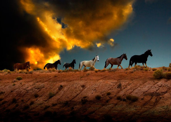 Wild Horses Greeting Card featuring the photograph Wild Horses At Sunset by Harry Spitz