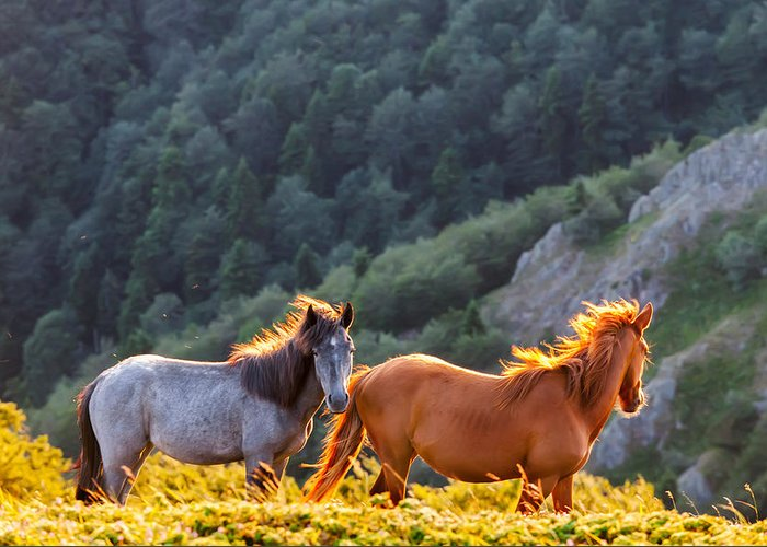 Balkan Mountains Greeting Card featuring the photograph Wild Horses by Evgeni Dinev