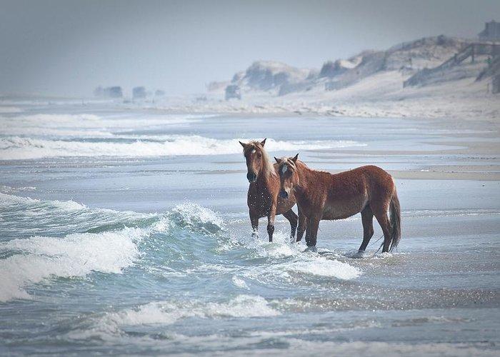 North Carolina Greeting Card featuring the photograph Wild Horses by Linda Cullivan