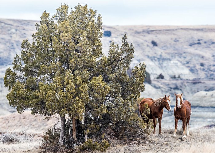 Wild Horses Greeting Card featuring the photograph Wild Horses by Paul Freidlund