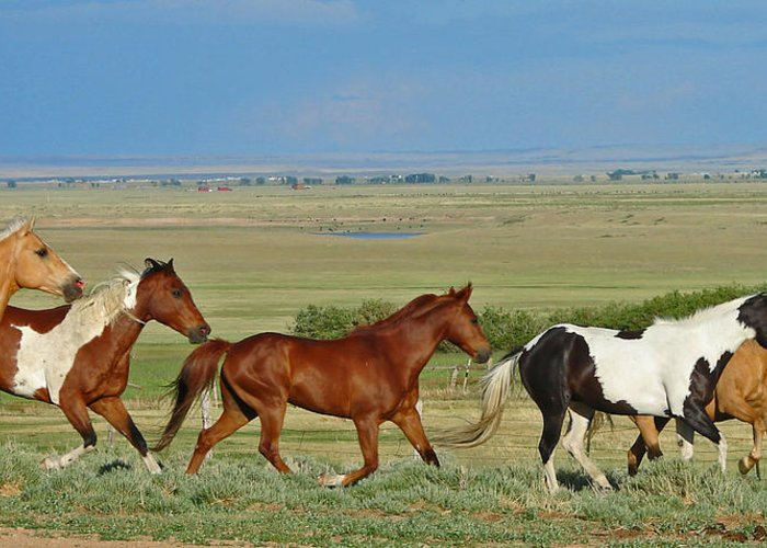 Herd Greeting Card featuring the photograph Wild Horses Wyoming by Heather Coen