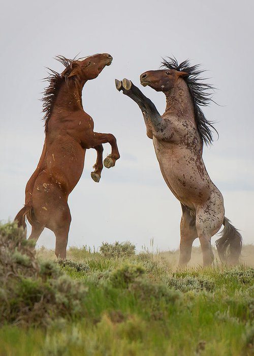 Horse Greeting Card featuring the photograph Wild Horse Challenge by Terry Hawthorne