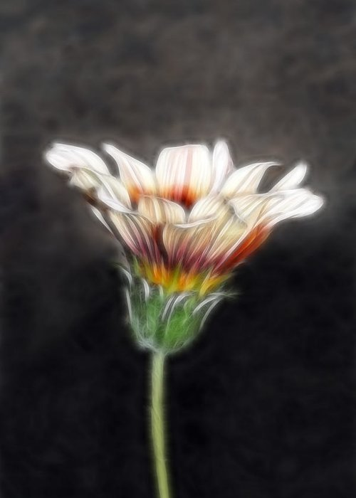 Wild Flowers Greeting Card featuring the photograph Wild Petal Dreams by Lesley Smitheringale