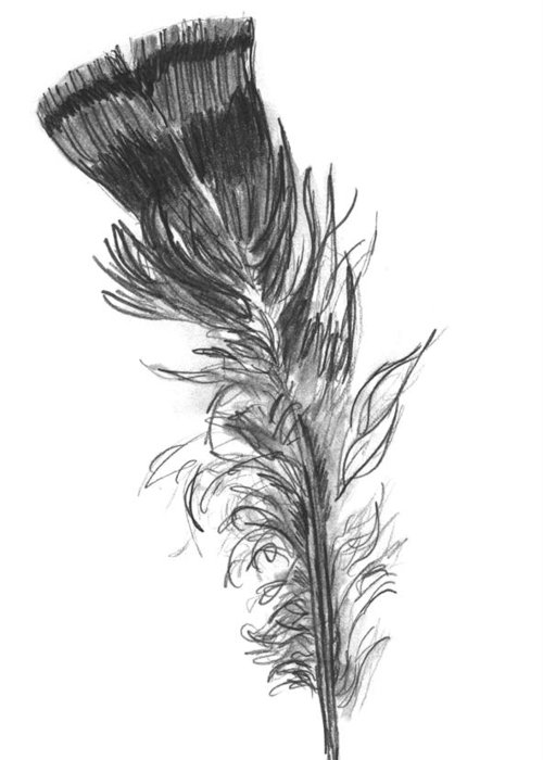 Wild Turkey Greeting Card featuring the drawing Wild Turkey Feather by Kevin Callahan