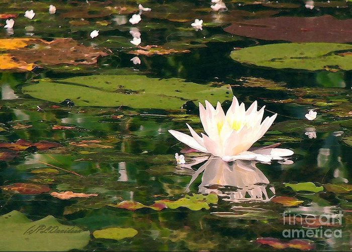 Water Lilly Greeting Card featuring the photograph Wild Water Lilly by Patricia L Davidson