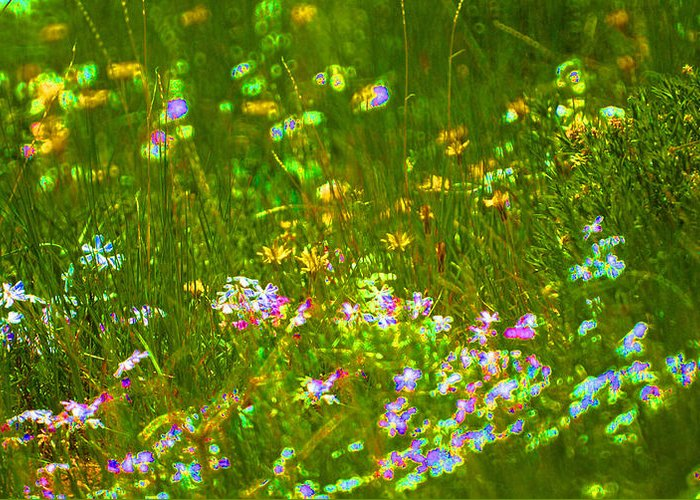 Wildflower Greeting Card featuring the photograph Wildflower Field by Heather Coen