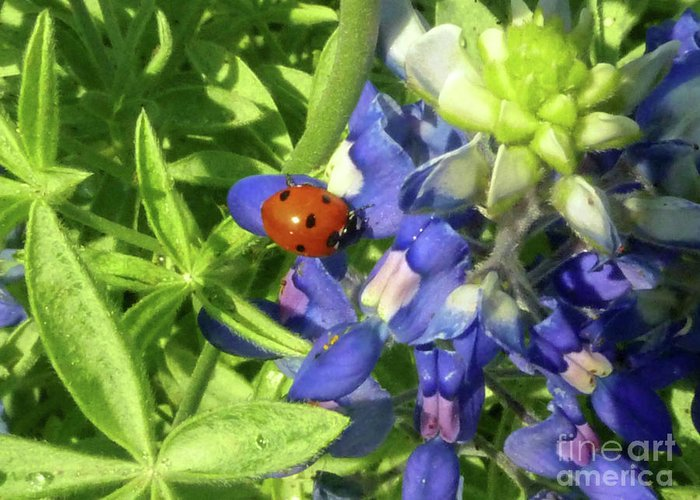 Nature Greeting Card featuring the photograph Wildflowers - Lucky Blubonnet by Lucyna A M Green