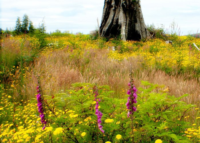 Stump Greeting Card featuring the photograph Wildflowers by Idaho Scenic Images Linda Lantzy