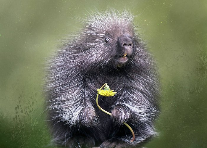 Porcupine Greeting Card featuring the digital art Will You Be Mine? by Nicole Wilde