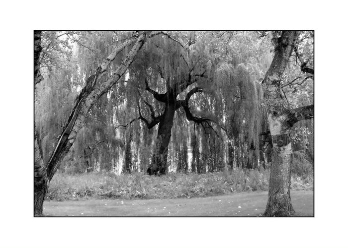 Willow Greeting Card featuring the photograph Willows by Filipe N Marques
