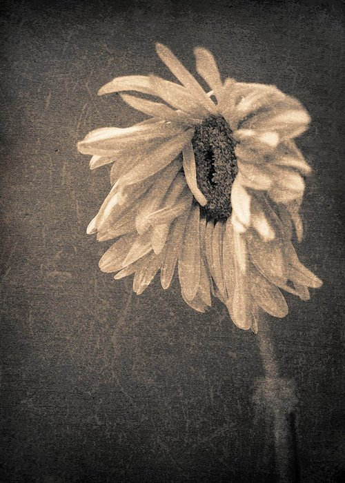 Flower Greeting Card featuring the photograph Wilting In Colour by Tara Turner