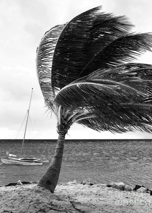Wind Greeting Card featuring the photograph Wind by John Rizzuto