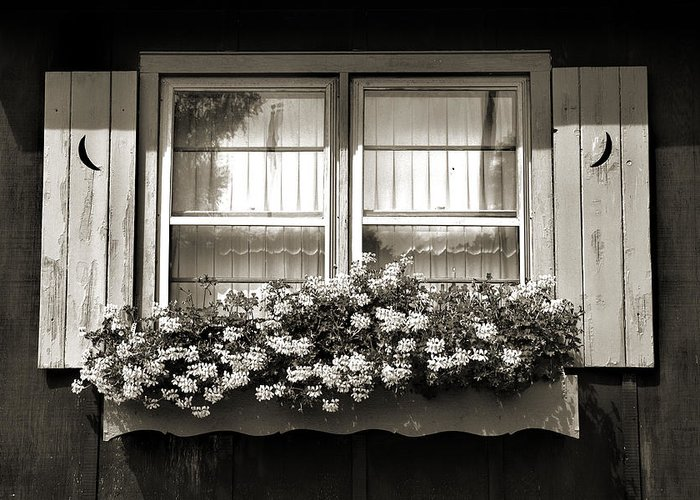 Window Greeting Card featuring the photograph Window Flower Box 2 by Joanne Coyle