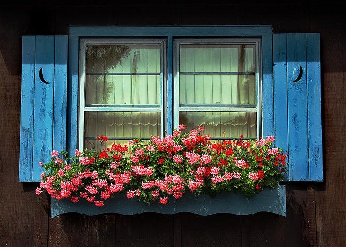 Flowers Greeting Card featuring the photograph Window Flower Box by Joanne Coyle