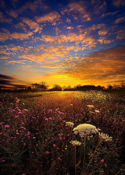 Horizons Greeting Card featuring the photograph Windsong by Phil Koch