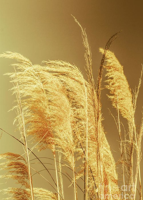 Dry Greeting Card featuring the photograph Windswept Autumn Brush Grass by Jorgo Photography - Wall Art Gallery