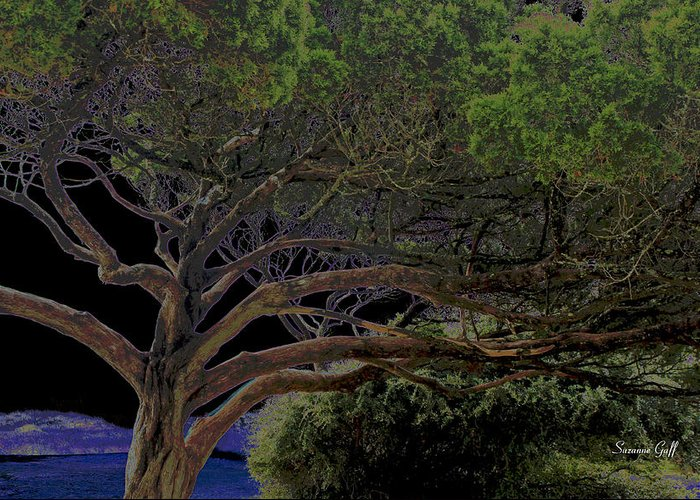 Tree Greeting Card featuring the photograph Windswept Dreams by Suzanne Gaff