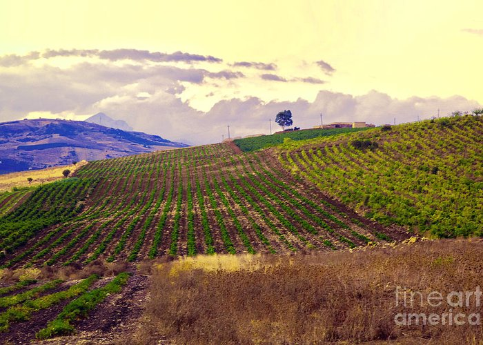 Wine Greeting Card featuring the photograph Wine Vineyard In Sicily by Madeline Ellis