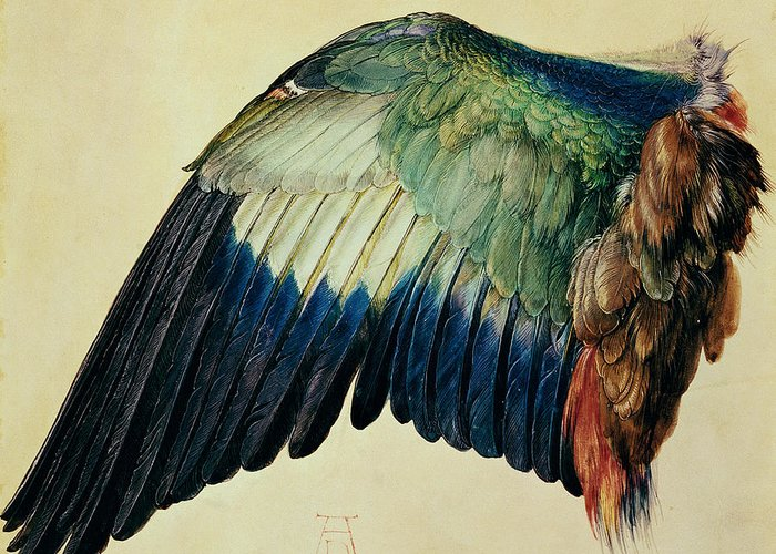 Wing Greeting Card featuring the painting Wing Of A Blue Roller by Albrecht Durer