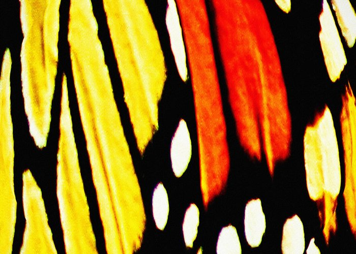 Butterfly Greeting Card featuring the photograph Wings Of A Monarch Butterfly Abstract by Carol F Austin