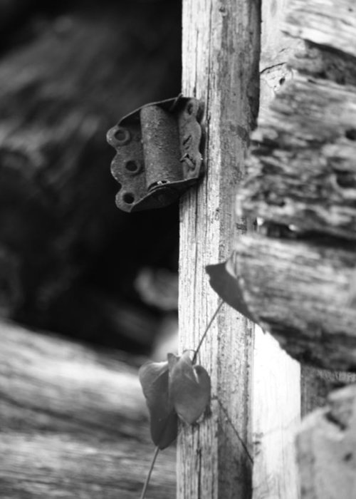 Ansel Adams Greeting Card featuring the photograph Winslow Cabin Door Detail by Curtis J Neeley Jr