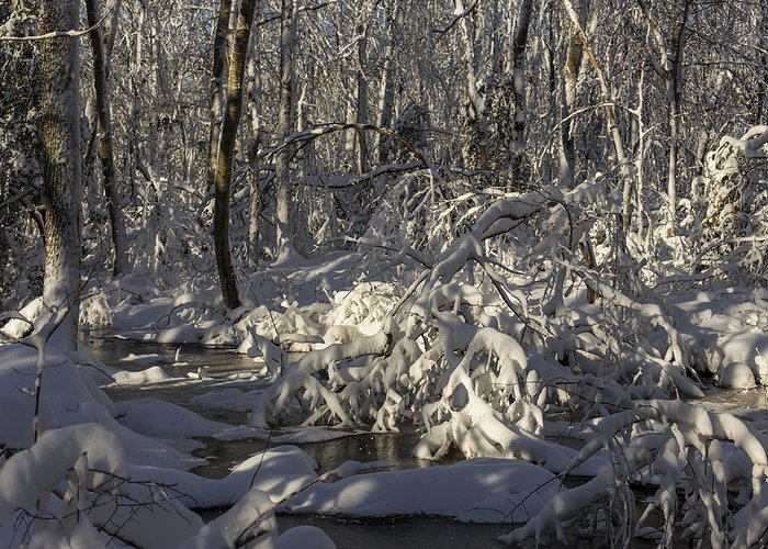 Andrew Pacheco Greeting Card featuring the photograph Winter At Borden Brook by Andrew Pacheco