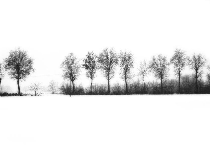 Winter Greeting Card featuring the photograph Winter Bareness by Silvia Ganora