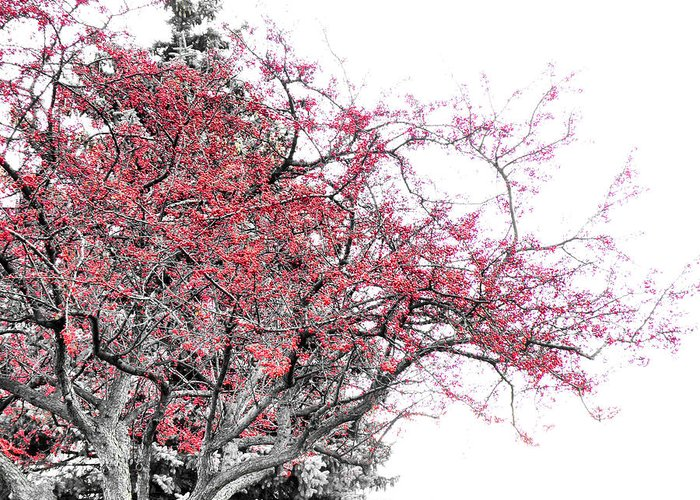 Black Greeting Card featuring the photograph Winter Berries by Scott Hovind
