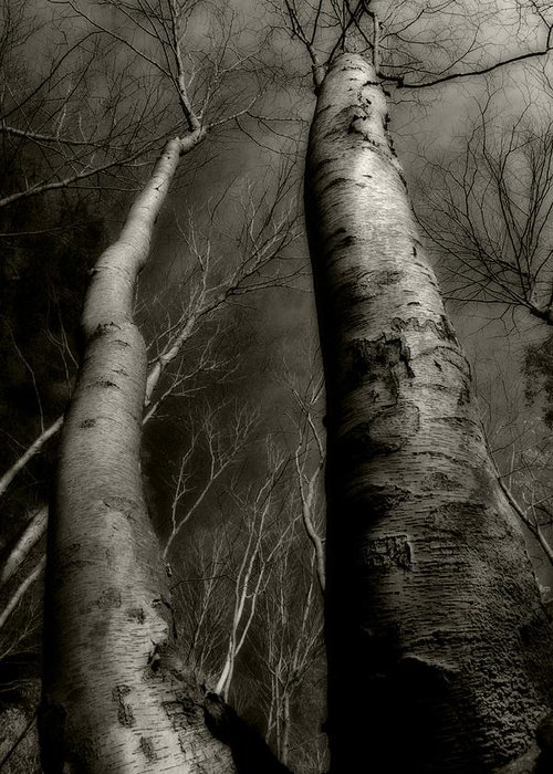 Trees Greeting Card featuring the photograph Winter Birch by Kim Zier
