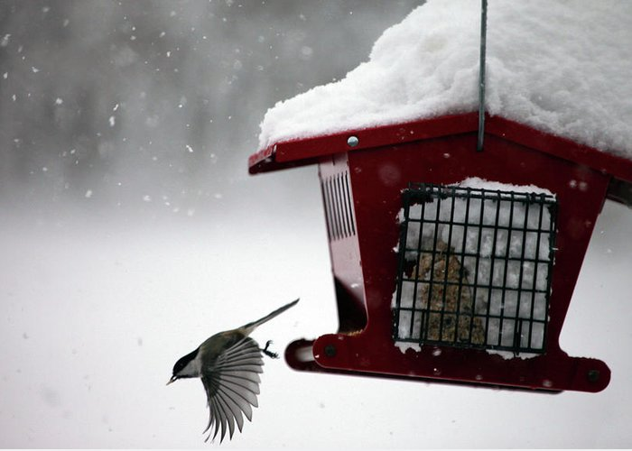 Bird Greeting Card featuring the photograph Winter Bird Feeder by Dan Pearce