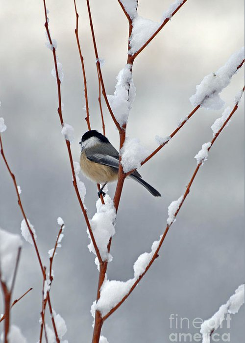 Berry Greeting Card featuring the photograph Winter Chickadee by Diane E Berry
