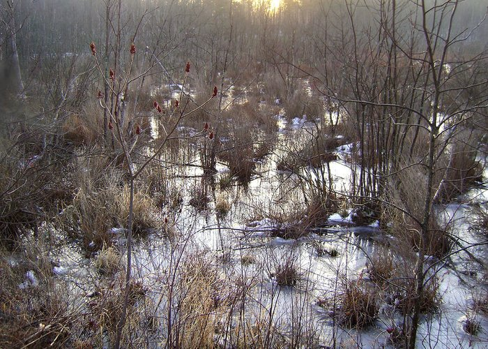 Winter Greeting Card featuring the photograph Winter Color Of A Wetland by Zackary Jones