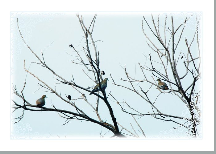 Dove Greeting Card featuring the photograph Winter Doves by Katherine Nutt